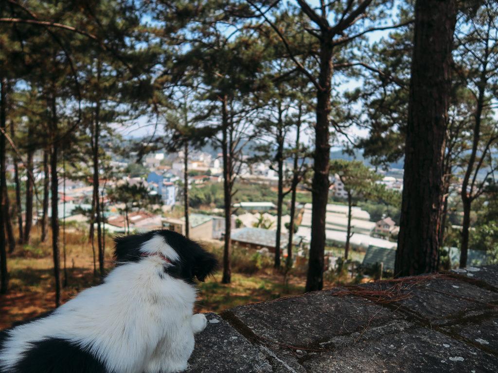 HomeFarm nằm cạnh rừng thông đến chó cũng phải mê
