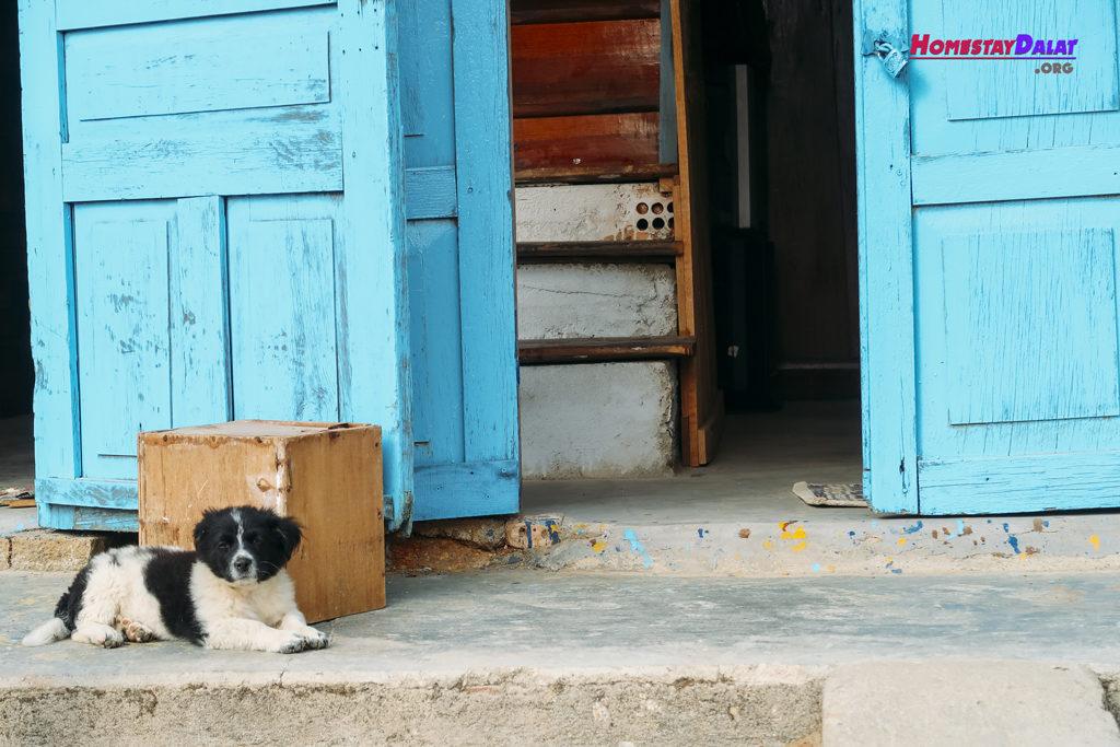 Chú cún con giữ nhà ở The Town Đà Lạt