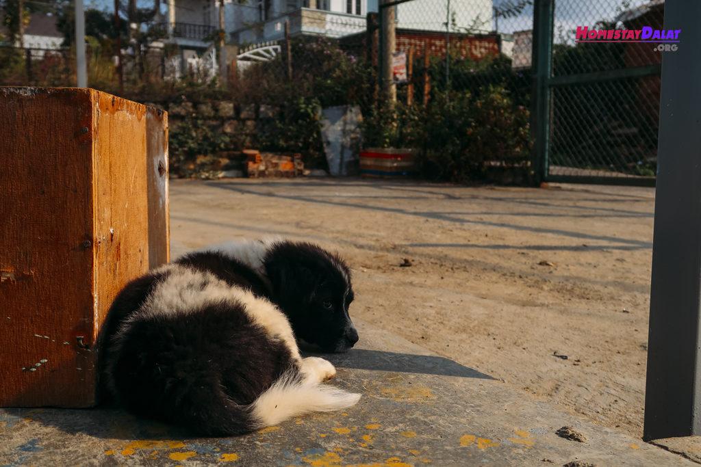 Chú chó con dễ thương ở The Town