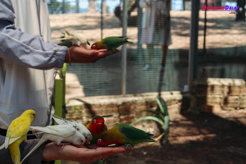 Cho chim sẻ wan ở ZooDoo Đà Lạt