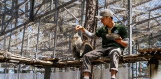 Gấu Mèo Nam Mỹ ở ZooDoo Đà Lạt