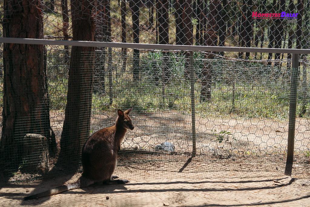 Giống chuột túi chân ngắn Nam Mỹ ở ZooDoo