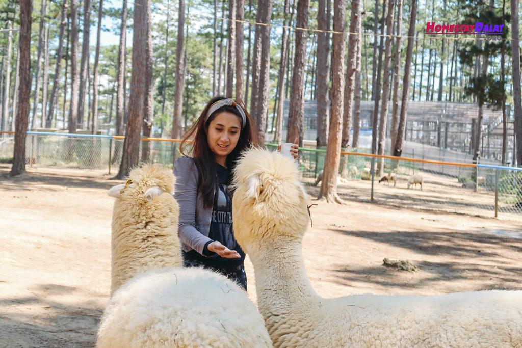 Khách du lịch chơi đùa cùng lạc đà ở ZooDoo