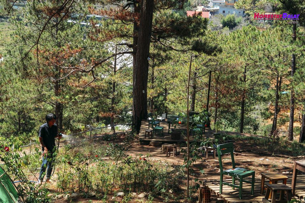 Khu vườn nhỏ của Moonrise Garden ngay đồi thông