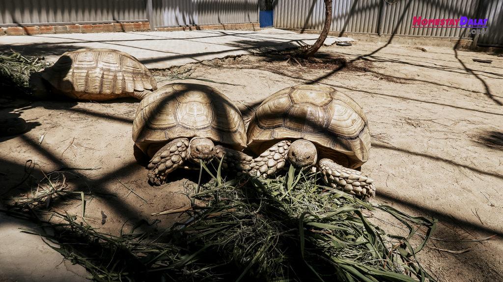 Loài rùa sống trên cạn ở ZooDoo