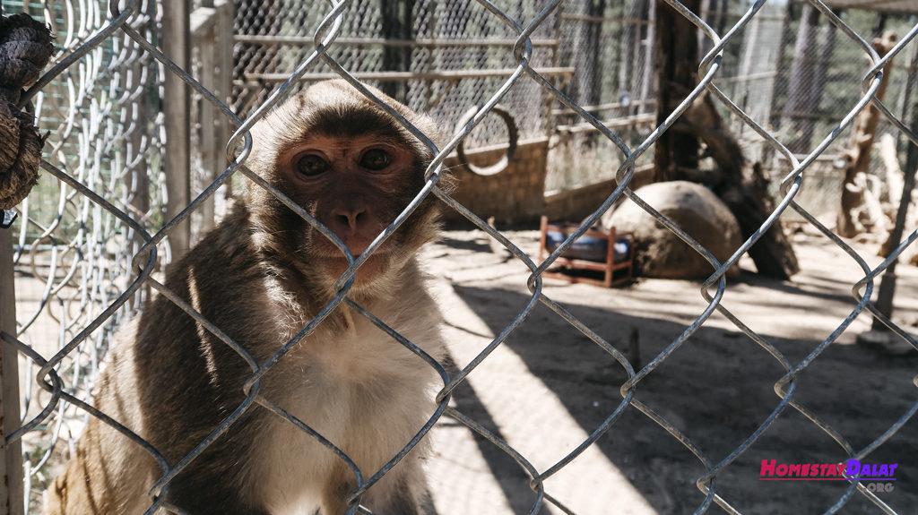 Một chú khỉ được chăm sóc bên trong lồng ở ZooDoo