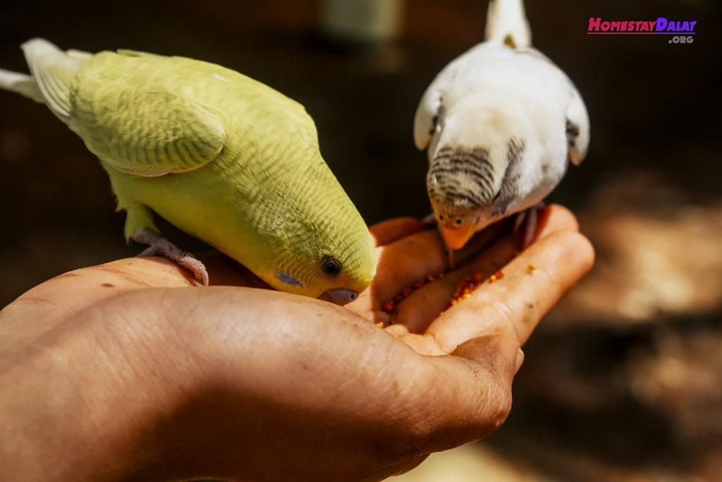 Những chú chim sẻ nhỏ ăn hạt
