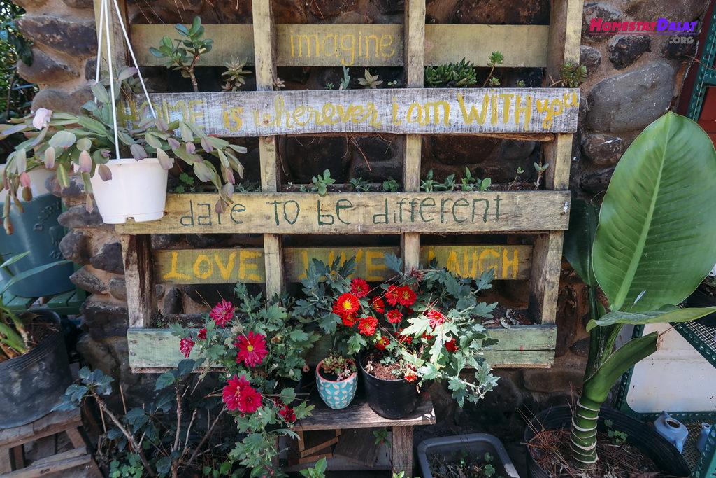 Những chậu hoa xinh xinh nhỏ nhỏ ở homestay Moonraise Garden Đà Lạt