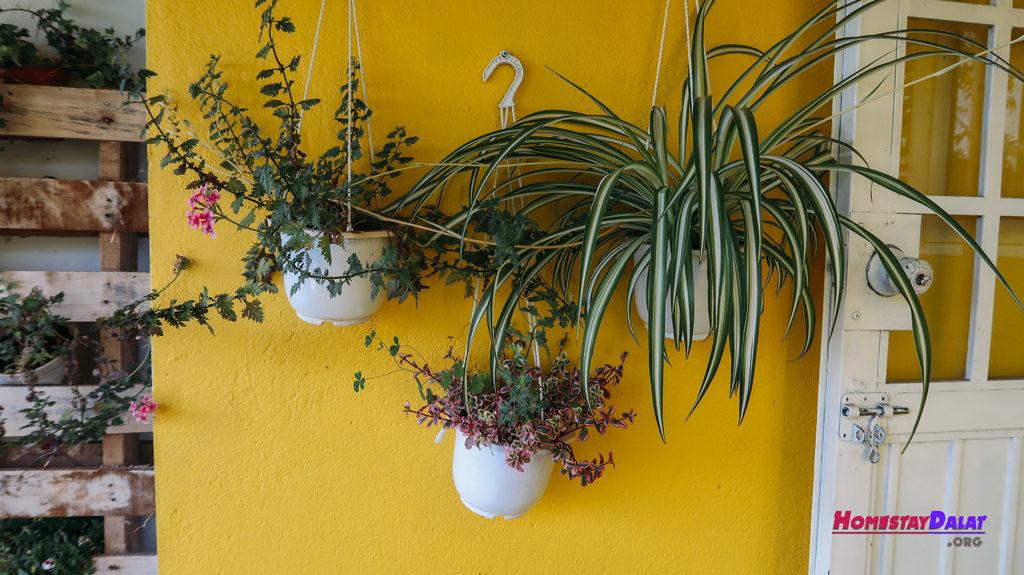 Nhiều chậu hoa được trang trí ở Together homestay