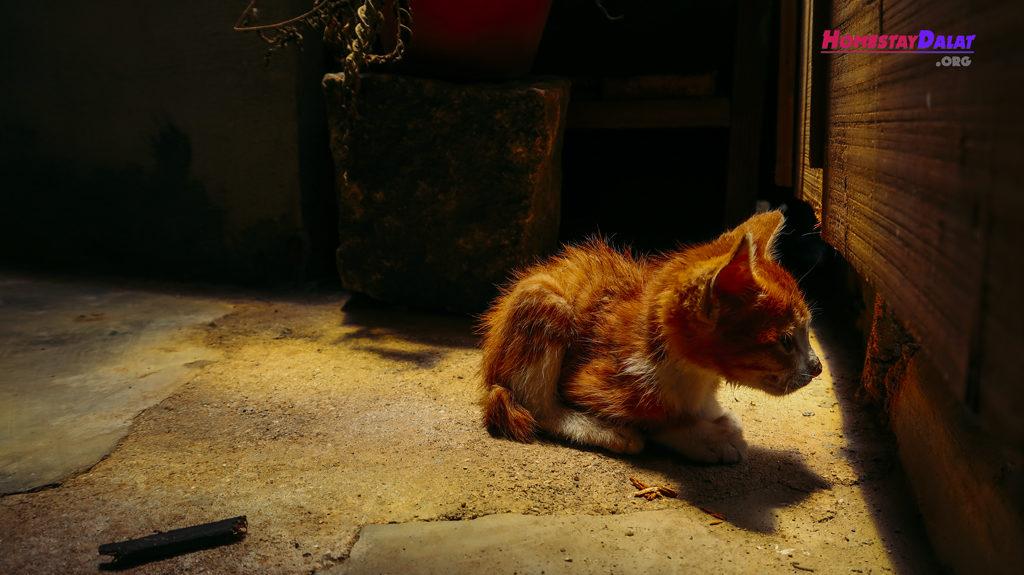 Chú mèo con nhà Home Me homestay