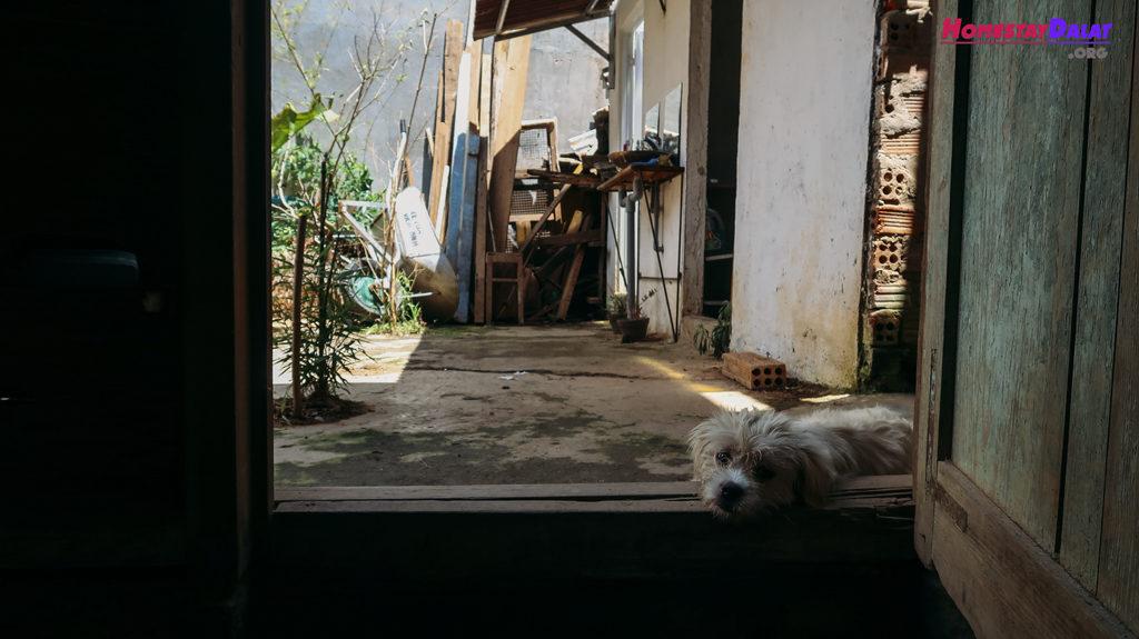 Home Me cũng có những chú chó dễ thương
