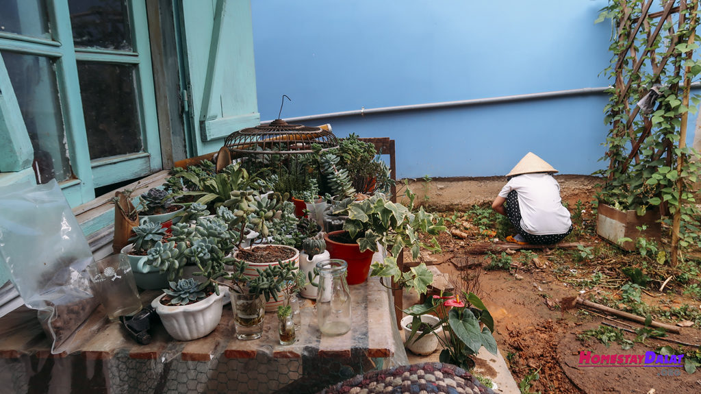 Khu vườn nhỏ được chủ nhân Vườn Đom Đóm chăm nom rất nhiều