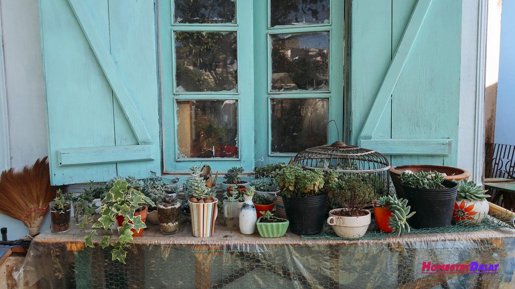 Những chậu cây nhỏ nhỏ xinh xinh ở Vườn Đom Đóm homestay