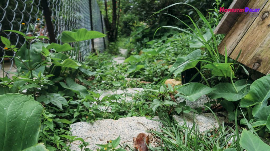 Đường đi vào vườn Teepee Dalat