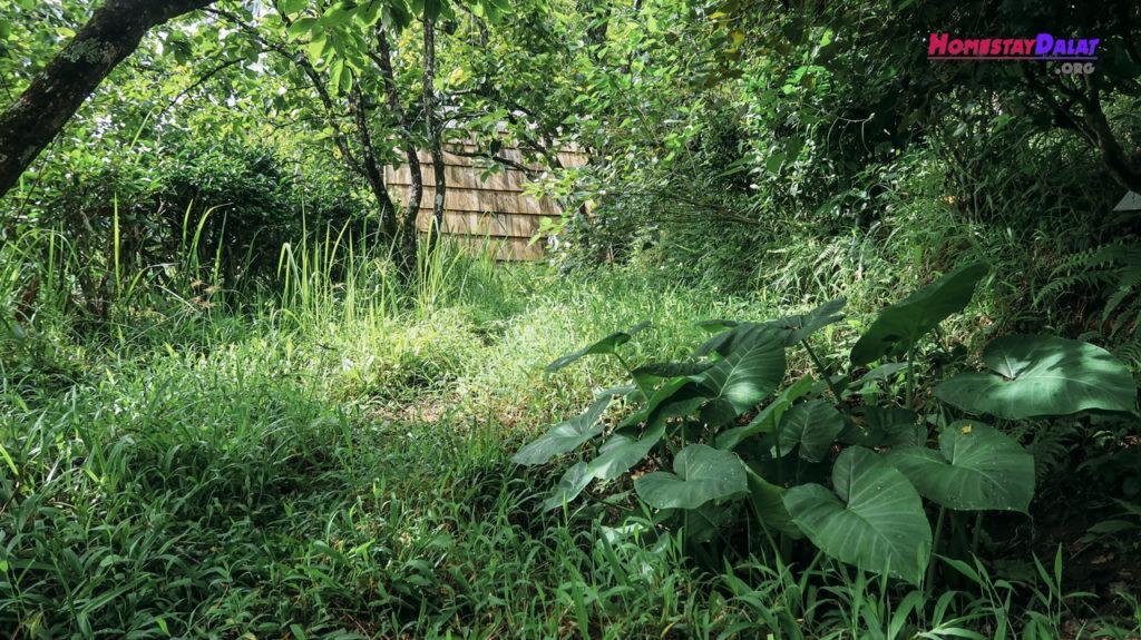 Bên trong vườn Teepee luôn xanh ngát